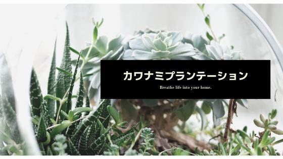 京都宇治グリーンショップのブログ by カワナミプランテーション