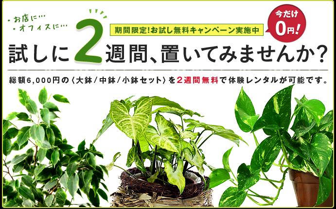 植木・観葉植物レンタル京都宇治