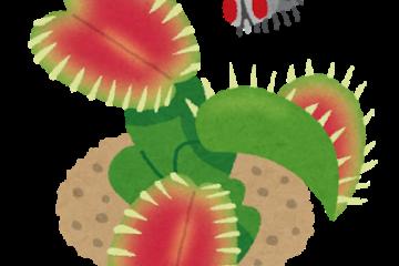 理芽/食虫植物