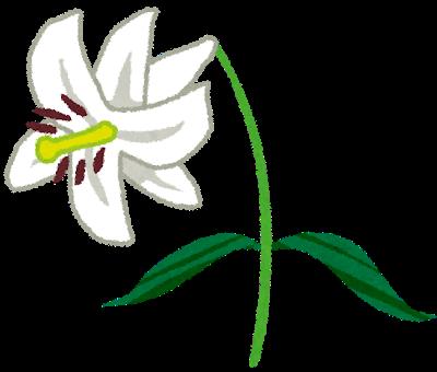 京都の花便りニュースレター
