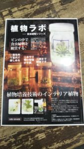 植物ラボ食虫植物