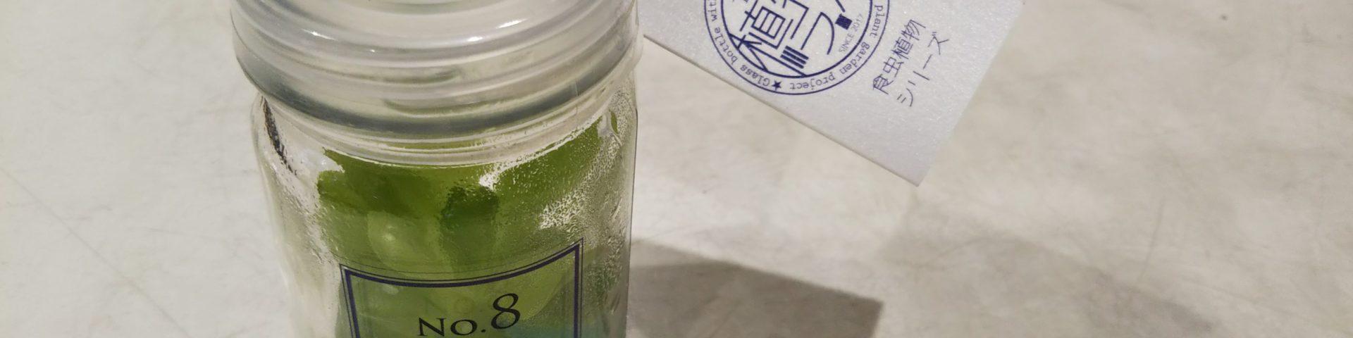 食虫植物ラボ瓶で育てる