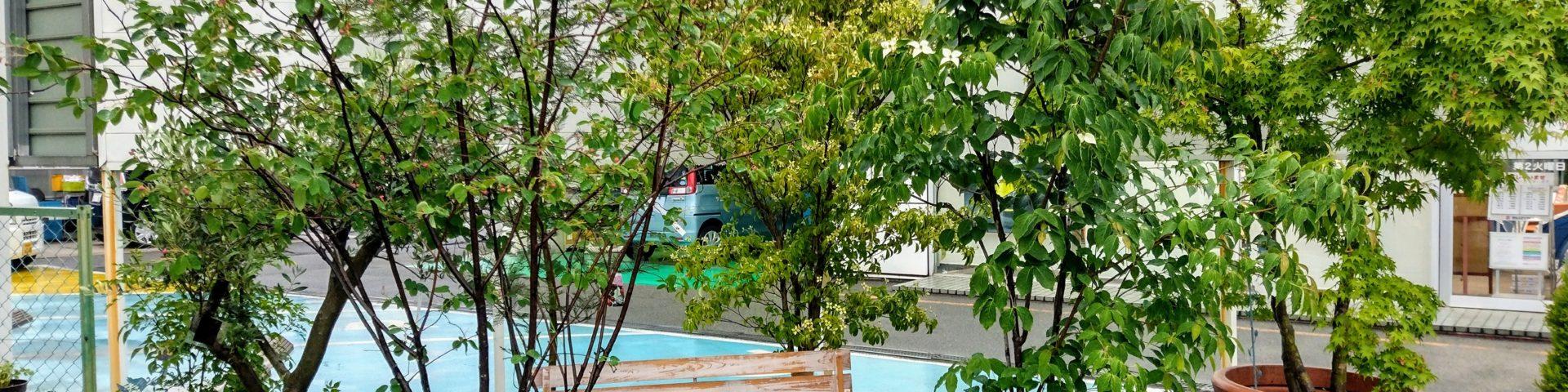 シンボルツリー用の植木販売中です@京都宇治かわなみ